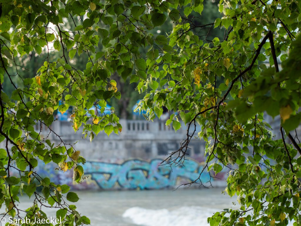 Munich flood river through trees