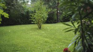 Garden, Pentax 110 wide angle